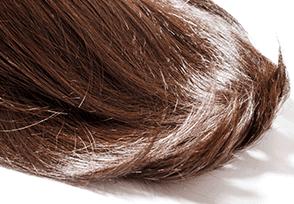 髪の毛の写真